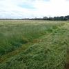 Clover Rye Grass Hay
