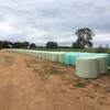Wheat silage