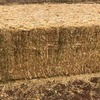 1000m/t Canola Hay with feed test