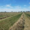 Under Auction - This Seasons Lucerne Hay Small Square Bales in packs of 21 - approximately 1000 - Sold by the Bale