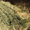 Small Bales of Oaten Hay Available - Grab load - in shed  - Hay & Fodder