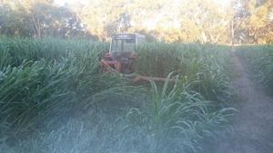 Sudan Grass Hay (Irrigation) No chemical   1x Drop Deck load