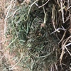 Top Grade New Season Clover Hay For Sale in 8x4x3's - 650-690Kgs