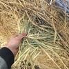 Oaten Hay Rolls For Prompt Sale