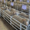East Bungaree and Borambil Ram sale results