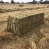 Oaten / Balansa Clover - 8x3x3 Bales approximately 200 Bales - SOLD By The BALE