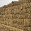 Oaten Cereal Hay 600kg+ 8x4x3 Bales ex farm shed