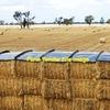 Windrow irrigation wheat straw