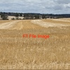 1,500 Acres Agistment Available - Stubble with undergrowth