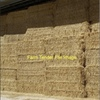 100 ton of windrowed Wheat Straw For Sale