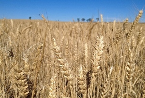 GRDC invests in grains lab at Condobolin