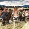 Tasmanian Organic Dairy industry set for growth