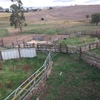 Sheep and Cattle yards