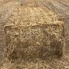 Canola Straw Bales 8x4x3