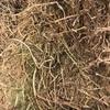 Vetch Hay 8x4x3 - 300 x 500 KG Approx Bales