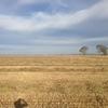 New Season Wheaten Hay For Sale ASASP off Paddock Slight Weather Damage