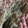 Oaten / Rye 220 Small square Bales - SOLD PER BALE