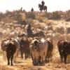 NAB Agribusiness Rising Champions Initiative