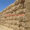 Barley Straw 8x4x3 - 600 x 420 KG Approx