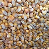 Feed Corn / Maize For Sale