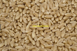 Wheat Seed  Grazing/Hay/Grain