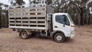 Hino 300  Truck And 2Deck Stockcrate