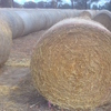 200 Tonne Barley Hay Rolls. P. 7.0%, ME. 8.7%. Delivered Tamworth NSW.