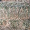 Italian ryegrass Balansa and Persian Clover Hay