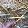 Oaten hay for sale in 8x4x3's