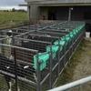 Calf feeding unit