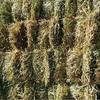 Small Bales Barley Hay New Season x 200 Bales.