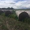 Italian ryegrass, balansa and persian clover 5 x 4 rolls