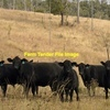 WANTED - Agistment for 100 to 200 Angus PTIC cows