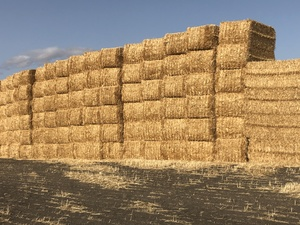 Windrowed and Header Trailed Wheaten Straw 8x4x3 Bales 530+ Kg's