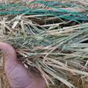 Oaten Hay excellent feed test
