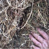 Vetch Hay For Sale in 8x4x3's - 280 Bales Available