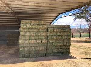 Lucerne Hay Small Squares - Canowindra NSW