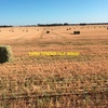 Barley Hay cut in 2017 stored in paddock stacks 6 high For Sale