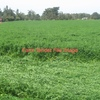 WANTED Farming Land for Lease or Share Farm Nathalia to deniliquin