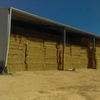 Lucene hay for sale