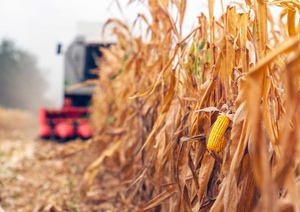 Grain Report - USDA takes some comfort out of global grain balance sheet