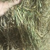 Good Vetch Hay For Sale Shedded in 8x4x3's