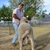 Mecardo Analysis - Non-mulesed premiums for selected fine Merino types