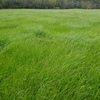 Very HQ Silage For Sale