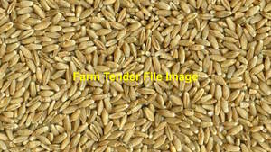 400/mt Triticale Wanted Ex Farm - Payment now and collect throughout next year