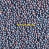 Vetch Seed ( Good Hay Vetch )x  150 m/t