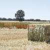 Hay Wanted, Oaten(No Seed) - Sub Clover/Rye ( Prefer Italian) - Italian Rye - Pasture - Cereal
