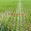 Irrigation Property 360 Acres