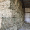 CANOLA HAY - 8x4x3  Shedded and ready for loading