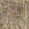 200 MT New season Barley Hay